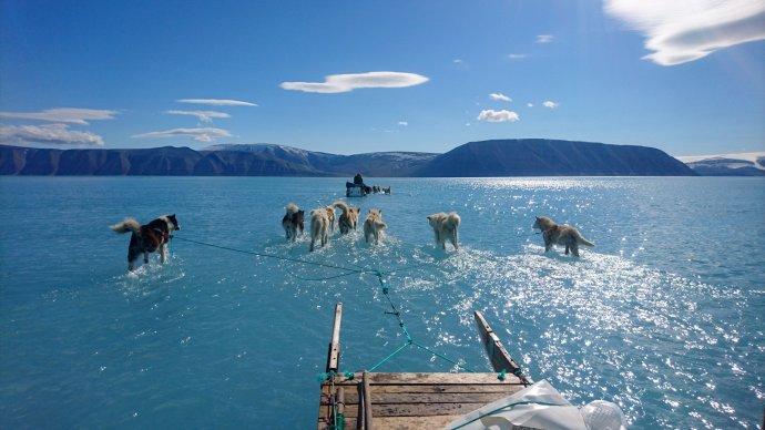 Psy vroztáté vodě pokrývající led vyfotil klimatolog zDanmarks Meteorologiske Institut při cestě se spřežením vGrónsku 13.června 2019. Foto:Steffen Olsen, AP/ČTK