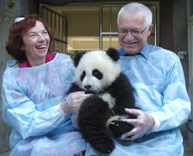 Pro většinu Evropanů a Američanů Čínu symbolizuje roztomilý medvídek panda. V roce 2004 si ho během své návštěvy provincie S'-čchuanu Čcheng-tu pochovali tehdejší prezident Václav Klaus s chotí. Foto: ČTK