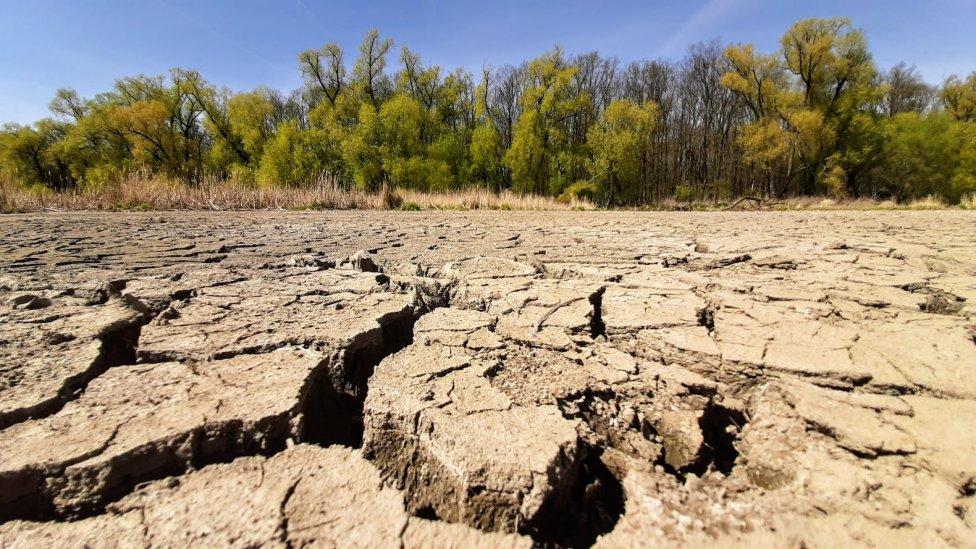 Sucho mění hlavně českou krajinu, na kterou jsou Češi tolik pyšní. Foto:Jan Moláček, DeníkN