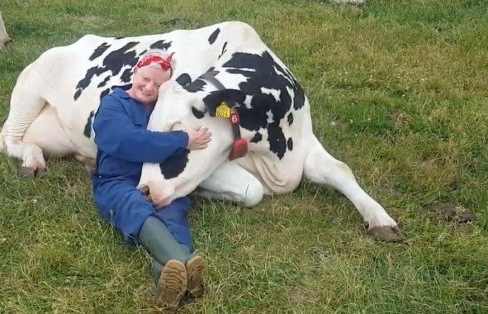 Uklidňující spočinutí v hřejivé příchylnosti kravského těla. Repro z YouTube