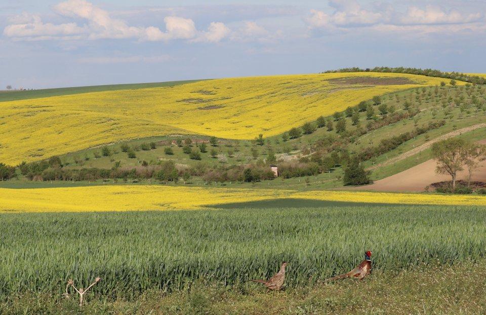 """""""Oslovil jsem všechny v okolí. Nikdo to nechtěl řešit, tak jsem se rozhodl, že to budu dělat já,"""" vysvětluje zemědělský inženýr, proč začal v jihomoravských Šardicích měnit okolí. Foto: Petra Marada"""