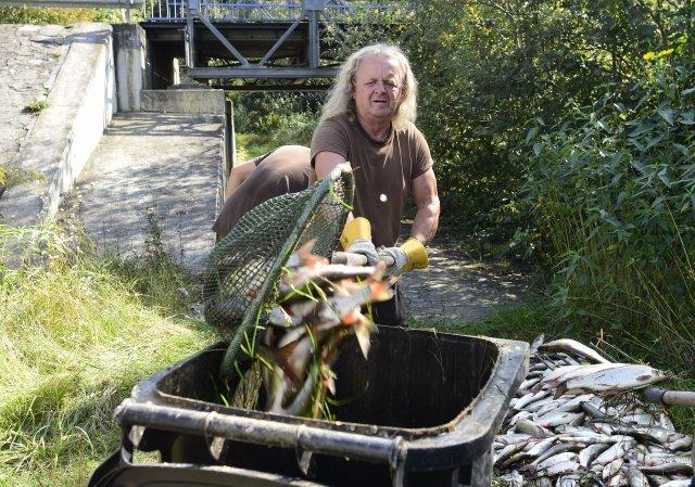 Rybáři nakládají leklé ryby zřeky Bečvy po zářijové ekologické havárii. Foto:ČTK