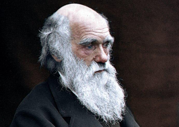 Díky Charlesi Darwinovi se začalo pomyslné pouto mezi lidmi anelidskými lidoopy opět navazovat. Foto: Julius Jääskeläinen, Flickr, CC BY 2.0