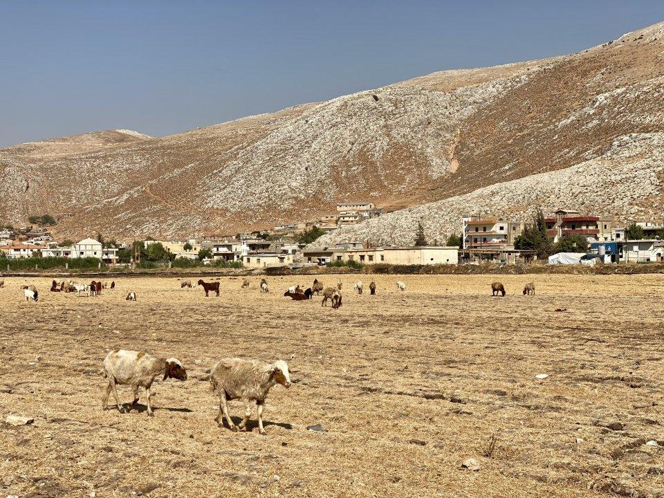 Údolí Bikáa. Za kopcem je už Sýrie. Foto:Mirek Tóda, DenníkN